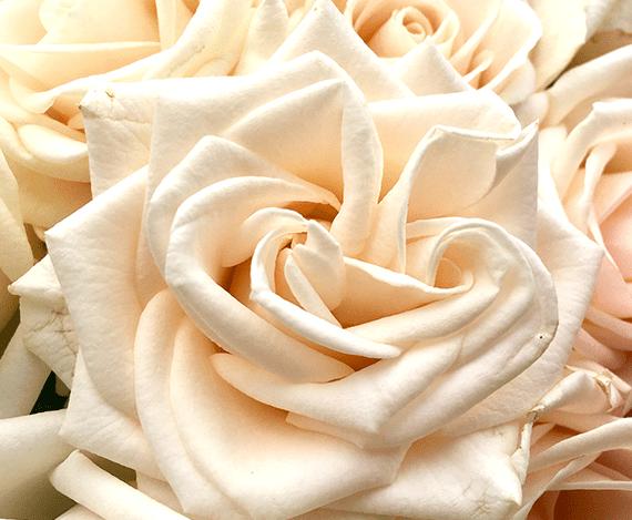 Image_of_Vandela_Rose_Bouquet_Wild_Flower_Studio_Image_Created_by_Jennifer_Cornish_Design_Newbury.png